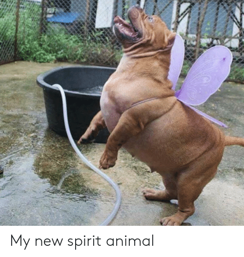 Animal, Spirit, and Spirit Animal: My new spirit animal