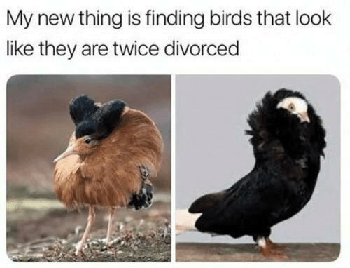 They Are: My new thing is finding birds that look  like they are twice divorced