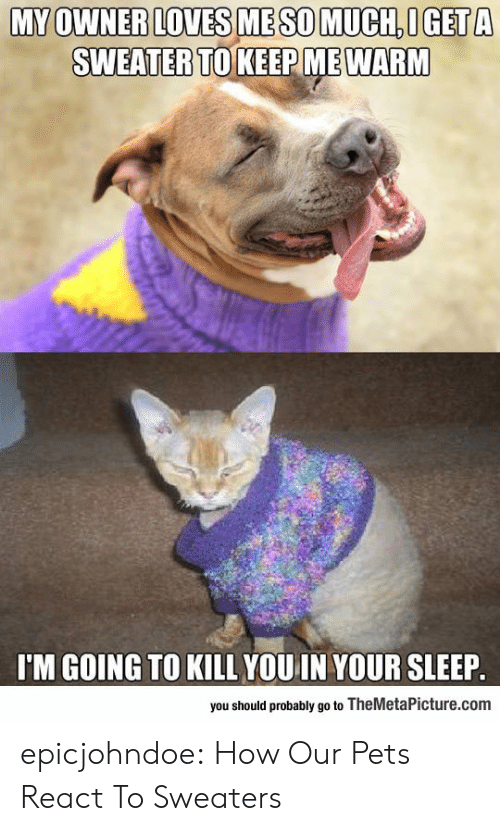 sweaters: MY OWNER LOVES ME SO MUCH OGET A  SWEATERTO KEEP MEWARM  I'M GOING TO KILL YOU IN YOUR SLEEP  you should probably go to TheMetaPicture.com epicjohndoe:  How Our Pets React To Sweaters