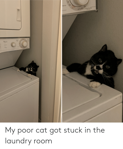 stuck: My poor cat got stuck in the laundry room