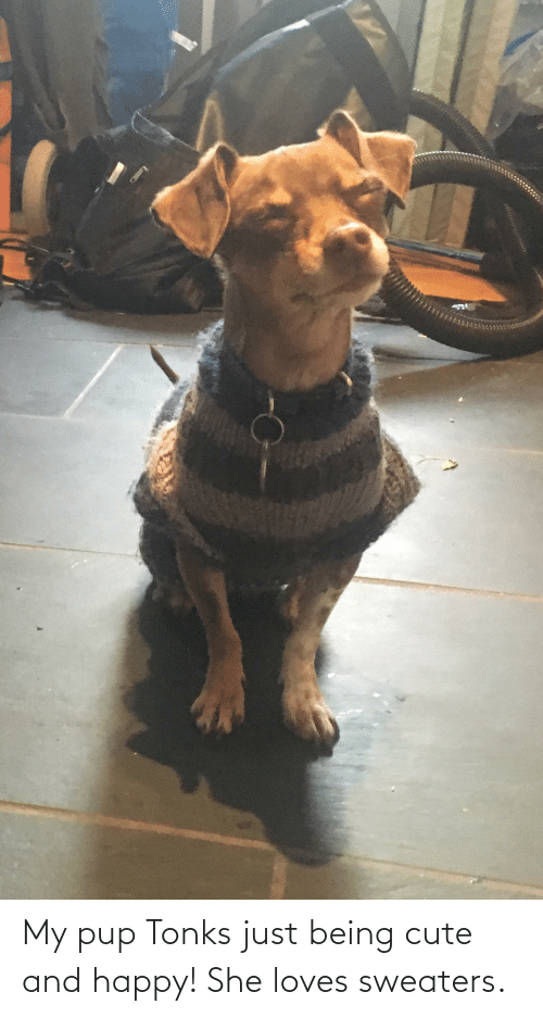 sweaters: My pup Tonks just being cute and happy! She loves sweaters.