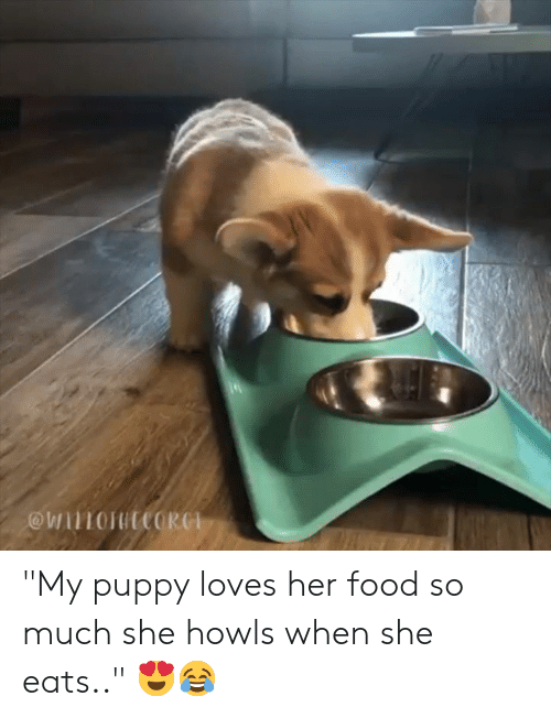 """Food, Puppy, and Her: """"My puppy loves her food so much she howls when she eats.."""" 😍😂"""