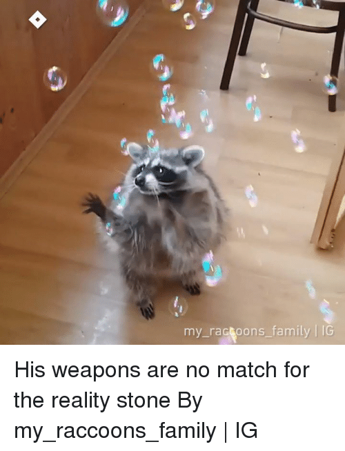 Dank, Family, and Match: my ractoons family IG His weapons are no match for the reality stone  By my_raccoons_family | IG