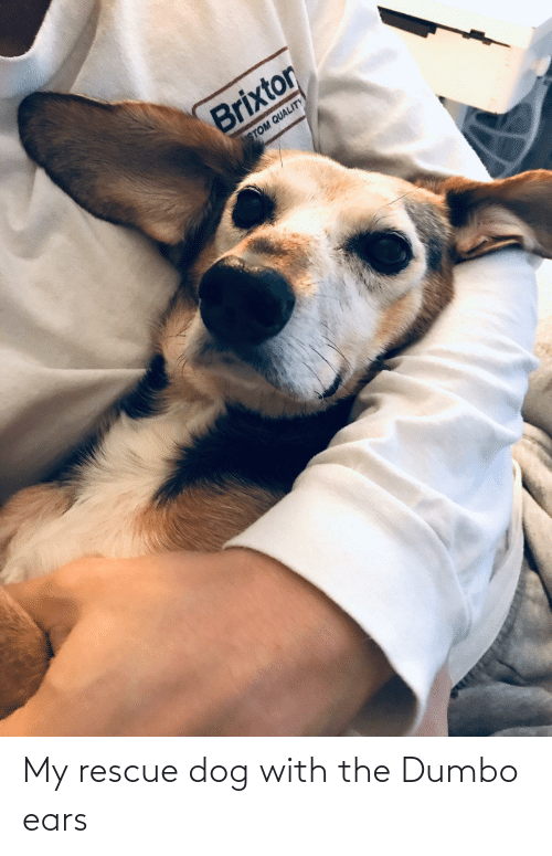 Dumbo: My rescue dog with the Dumbo ears
