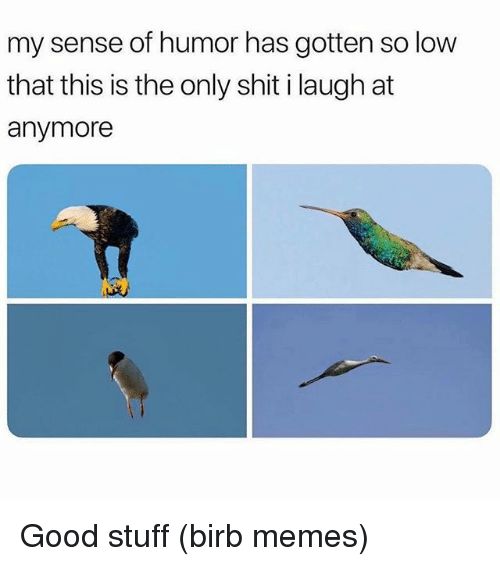 Memes, Shit, and Good: my sense of humor has gotten so low  that this is the only shit i laugh at  anymore Good stuff (birb memes)