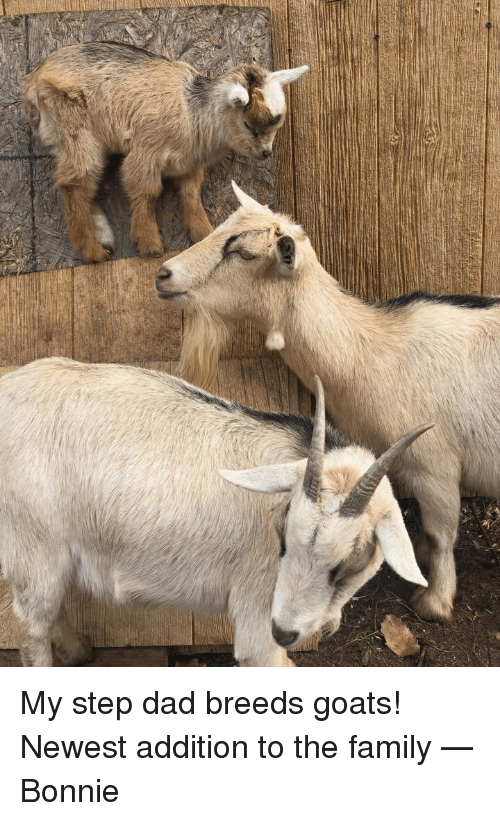 Dad, Family, and Step: My step dad breeds goats! Newest addition to the family — Bonnie