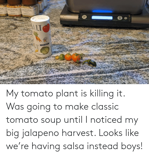 boys: My tomato plant is killing it. Was going to make classic tomato soup until I noticed my big jalapeno harvest. Looks like we're having salsa instead boys!