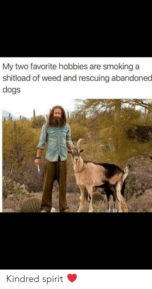 Dogs, Smoking, and Weed: My two favorite hobbies are smoking  shitload of weed and rescuing abandoned  dogs Kindred spirit ❤️