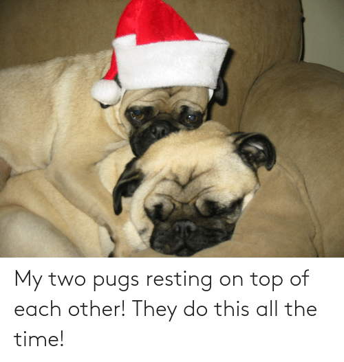 Resting: My two pugs resting on top of each other! They do this all the time!