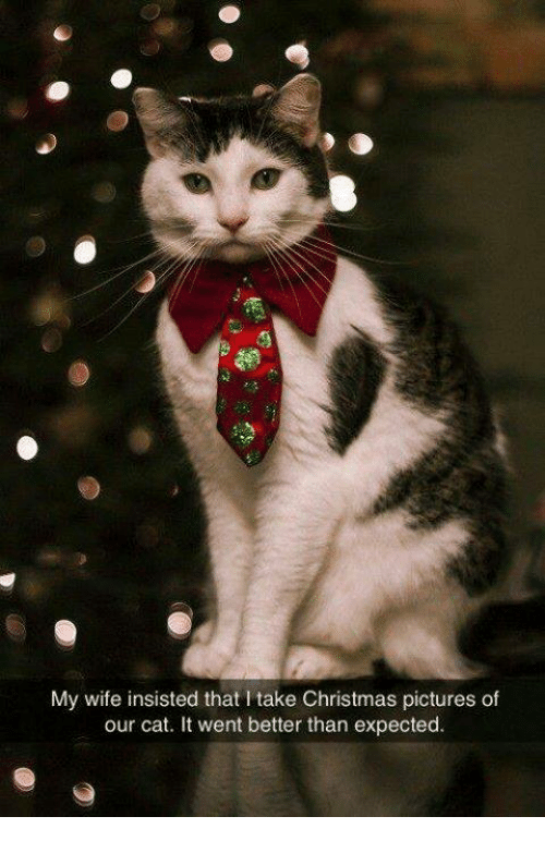 Christmas, Memes, and Pictures: My wife insisted that I take Christmas pictures of  our cat. It went better than expected.