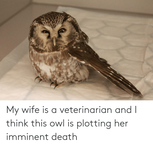 Death: My wife is a veterinarian and I think this owl is plotting her imminent death