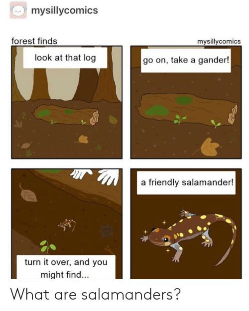 Forest, Log, and Salamander: mysillycomics  forest finds  mysillycomics  look at that log  go on, take a gander!  a friendly salamander!  turn it over, and you  might find... What are salamanders?