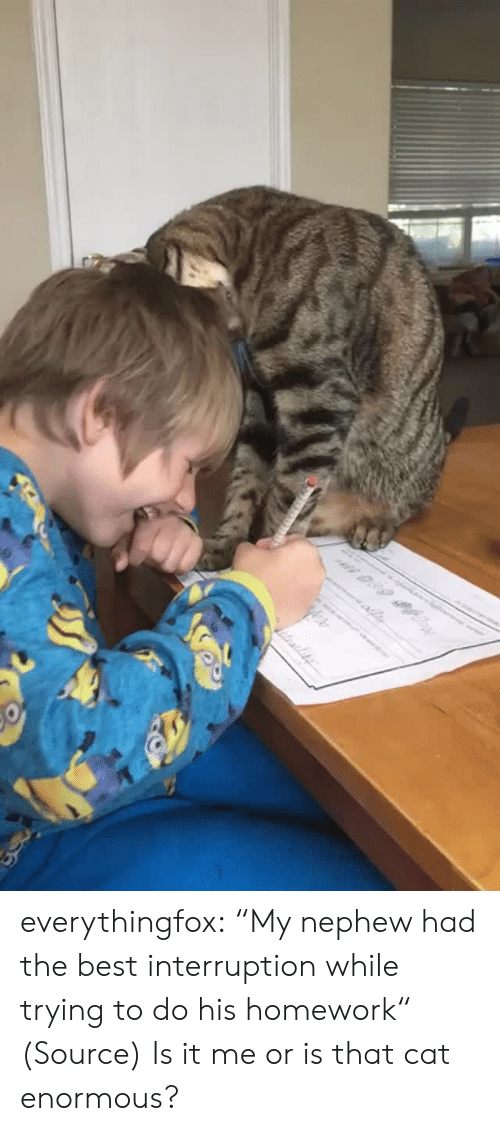 "it-me: n 0.99 everythingfox:  ""My nephew had the best interruption while trying to do his homework"" (Source)   Is it me or is that cat enormous?"