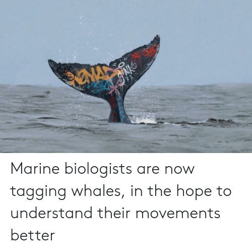 whales: NA  77 Marine biologists are now tagging whales, in the hope to understand their movements better