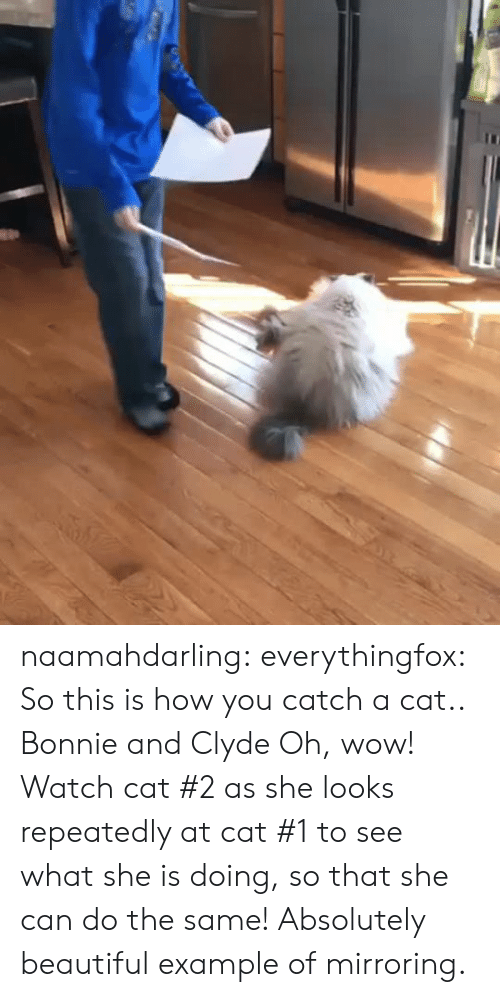 Example Of: naamahdarling:  everythingfox:   So this is how you catch a cat..   Bonnie and Clyde   Oh, wow! Watch cat #2 as she looks repeatedly at cat #1 to see what she is doing, so that she can do the same! Absolutely beautiful example of mirroring.