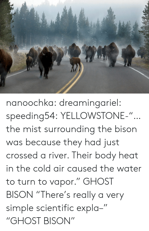 "bison: nanoochka:  dreamingariel:  speeding54:  YELLOWSTONE-""…the mist surrounding the bison was because they had just crossed a river. Their body heat in the cold air caused the water to turn to vapor.""  GHOST BISON  ""There's really a very simple scientific expla–"" ""GHOST BISON"""