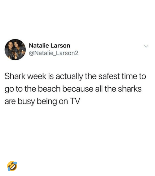 shark week: Natalie Larson  @Natalie_Larson2  Shark week is actually the safest time to  go to the beach because all the sharks  are busy being on TV 🤣