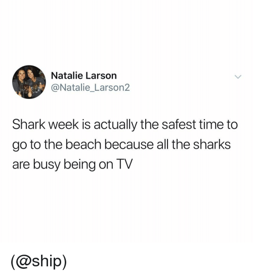 shark week: Natalie Larson  @Natalie_Larson2  Shark week is actually the safest time to  go to the beach because all tne sharkS  are busy being on TV (@ship)