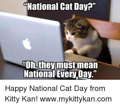 """Happy National Cat Day: National Cat Day?""""  Oh, theymustmean  National Every Day."""" Happy National Cat Day from Kitty Kan!  www.mykittykan.com"""