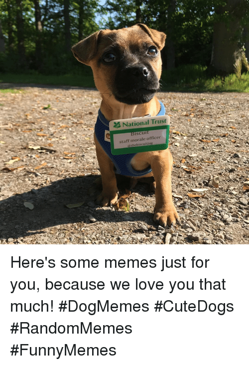 morale: National Trust N  iscu  staff morale officer  @thebiscuitjug Here's some memes just for you, because we love you that much! #DogMemes #CuteDogs #RandomMemes #FunnyMemes