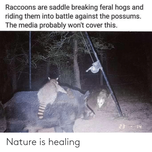 Nature: Nature is healing