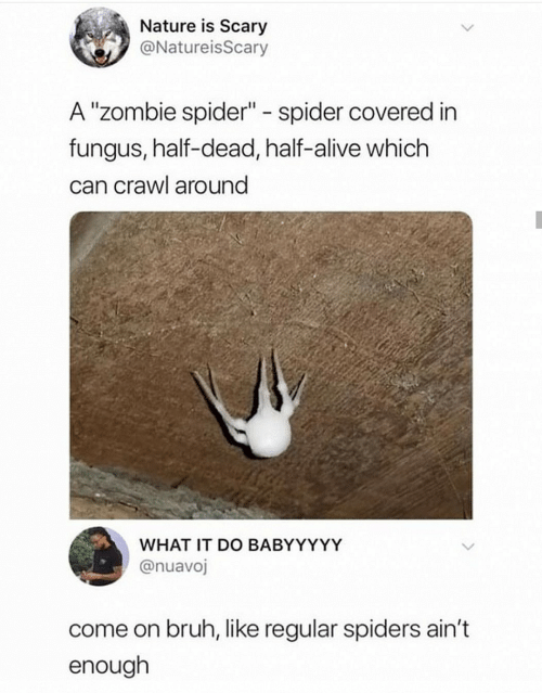 """Alive, Bruh, and Spider: Nature is Scary  @NatureisScary  A """"Zombie spider"""" spider covered in  fungus, half-dead, half-alive which  can crawl around  WHAT IT DO BABYYYYY  @nuavoj  come on bruh, like regular spiders ain't  enough"""