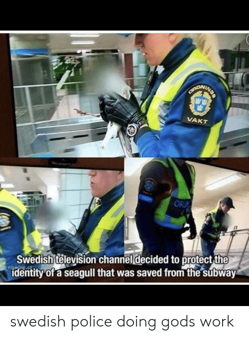Television: NDA  CANONINE  VAKT  OR  Swedish television channel decided to protect the  identity of a seagull that was saved from the subway swedish police doing gods work