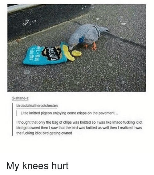 Getting Owned: ne  2-shane.s  birdsofafeathercolchester:  Little knitted pigeon enjoying come crisps on the pavement.  I thought that only the bag of chips was knitted so I was like Imaoo fucking idiot  bird got owned then I saw that the bird was knitted as well then I realized I was  the fucking idiot bird getting owned My knees hurt