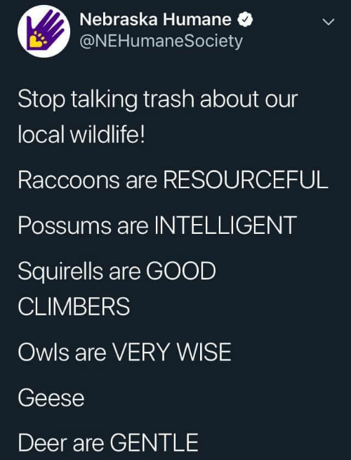 geese: Nebraska Humane  @NEHumaneSociety  Stop talking trash about our  local wildlife!  Raccoons are RESOURCEFUL  Possums are INTELLIGENT  Squirells are GOOD  CLIMBERS  Owls are VERY WISE  Geese  Deer are GENTLE