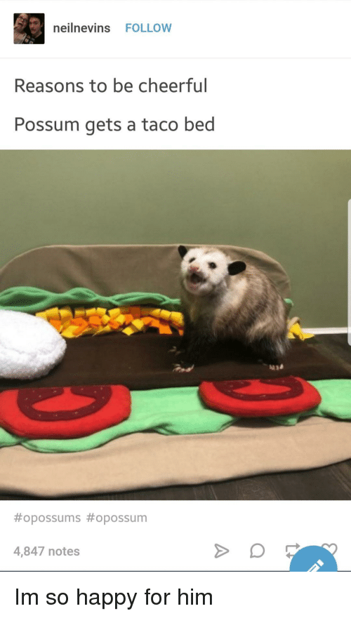 Possum: neilnevins FOLLOW  Reasons to be cheerful  Possum gets a taco bed  #opossums #opossum  4,847 notes Im so happy for him