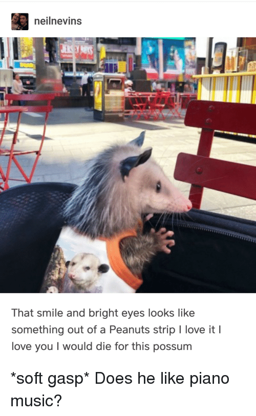 Love, Music, and I Love You: neilnevins  That smile and bright eyes looks like  something out of a Peanuts strip I love it I  love you I would die for this possum *soft gasp* Does he like piano music?