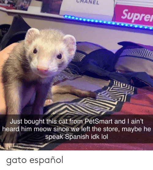 gato: NEL  Suprer  Just bought this cat from PetSmart and I ain't  heard him meow since we left the store, maybe he  speak Spanish idk lol gato español