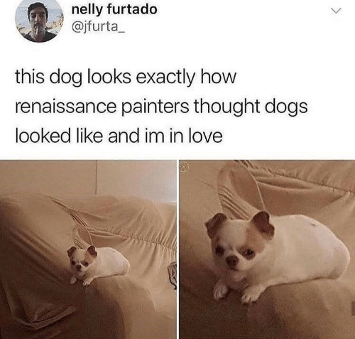 Dogs, Love, and Nelly: nelly furtado  @jfurta_  this dog looks exactly how  renaissance painters thought dogs  looked like and im in love