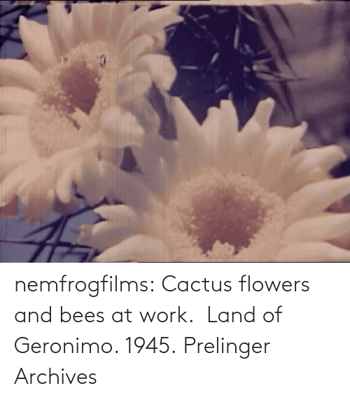 Bees: nemfrogfilms: Cactus flowers and bees at work.  Land of Geronimo. 1945. Prelinger Archives