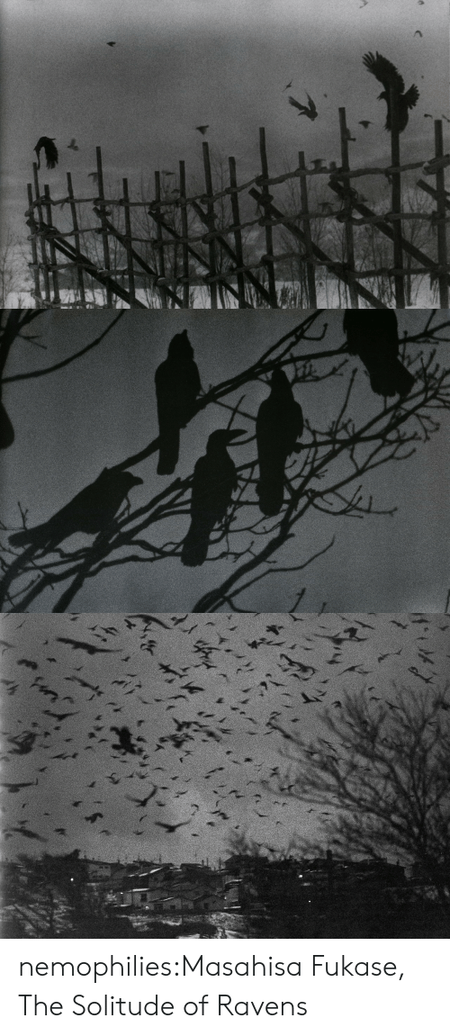 Tumblr, Blog, and Http: nemophilies:Masahisa Fukase, The Solitude of Ravens
