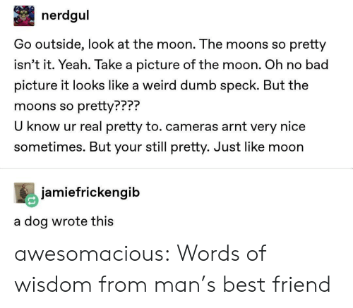 Know Ur: nerdgul  Go outside, look at the moon. The moons so pretty  isn't it. Yeah. Take a picture of the moon. Oh no bad  picture it looks like a weird dumb speck. But the  moons so pretty???  U know ur real pretty to. cameras arnt very nice  sometimes. But your still pretty. Just like moon  PPP?  jamiefrickengib  a dog wrote thiS awesomacious:  Words of wisdom from man's best friend