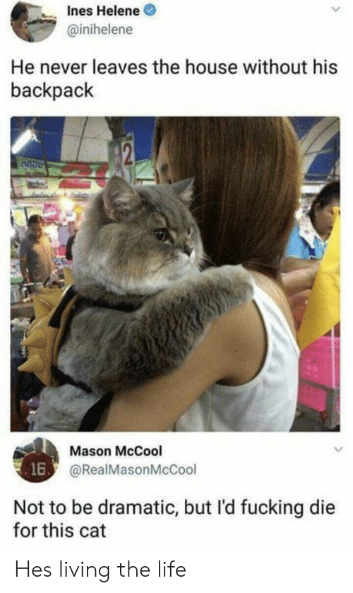 nes: nes Helene  @inihelene  He never leaves the house without his  backpack  Mason McCool  @RealMasonMcCool  16  Not to be dramatic, but l'd fucking die  for this cat Hes living the life