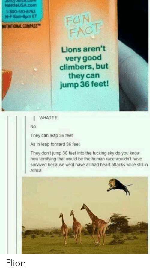 Africa, Fucking, and Good: NestieU5A.com  1-800-510-6763  M-F 8am-8pm ET  NUTRITIONAL COMPASS  FACT  Lions aren't  very good  climbers, but  they can  jump 36 feet!  I WHAT!!!!  No  They can leap 36 feet  As in leap forward 36 feet  They don't jump 36 feet into the fucking sky do you know  how terrifying that would be the human race wouldn't have  survived because we'd have all had heart attacks while still in  Africa Flion