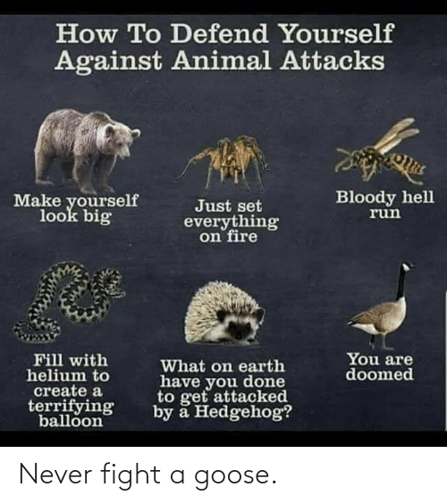 Fight: Never fight a goose.