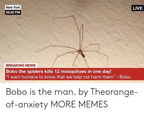 "Dank, Memes, and New York: New York  LIVE  08:26 PM  BREAKING NEWS  Bobo the spiders kills 12 mosquitoes in one day!  ""I want humans to know that we help not harm them"" Bobo Bobo is the man. by Theorange-of-anxiety MORE MEMES"
