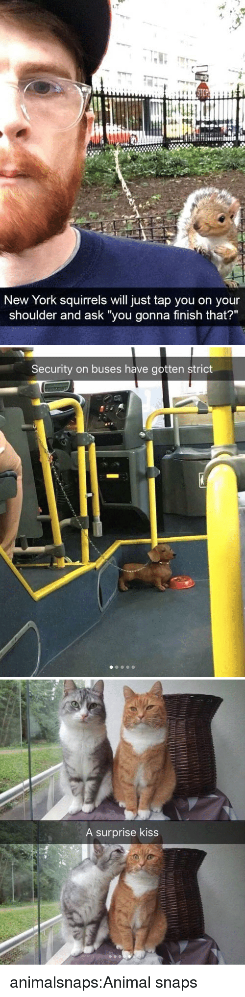 """New York, Target, and Tumblr: New York squirrels will just tap you on your  shoulder and ask """"you gonna finish that?""""   Security on buses have gotten strict   A surprise kiss animalsnaps:Animal snaps"""
