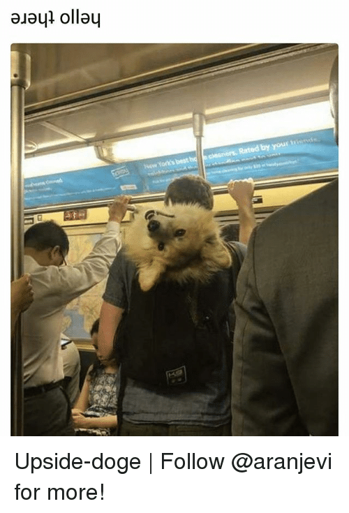Dogee: New York's best  Rated by your tisnss Upside-doge | Follow @aranjevi for more!
