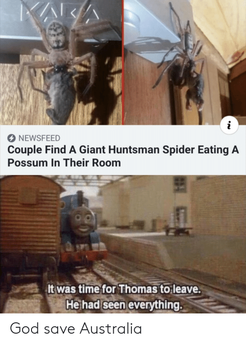 Possum: NEWSFEED  Couple Find A Giant Huntsman Spider Eating A  Possum In Their Room  It was time for Thomas to leave.  He had seen everything. God save Australia