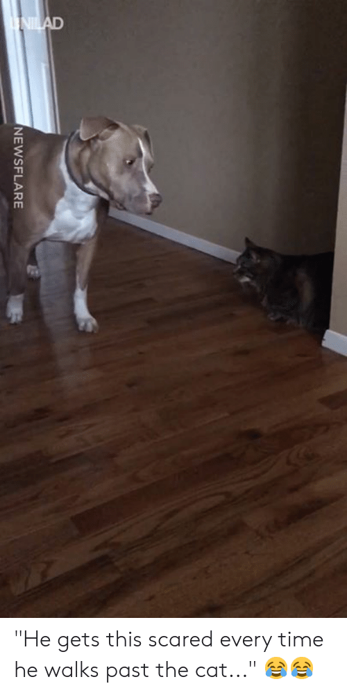 """Dank, Time, and 🤖: NEWSFLARE """"He gets this scared every time he walks past the cat..."""" 😂😂"""