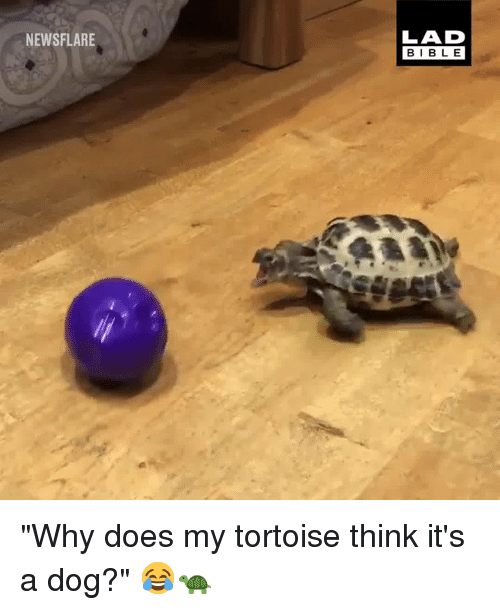 "Dank, 🤖, and Dog: NEWSFLARE  LAD  BIBL E ""Why does my tortoise think it's a dog?"" 😂🐢"