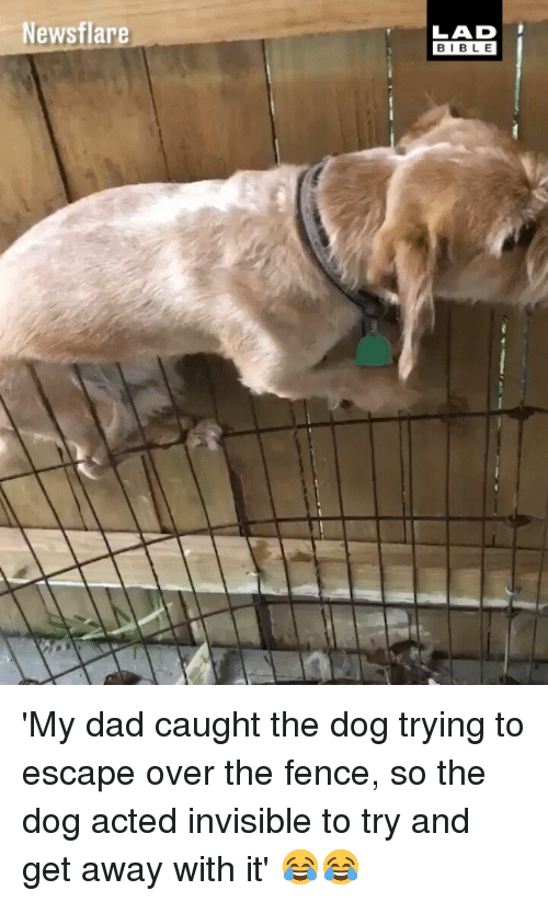Dad, Memes, and Bible: Newsflare  LAD  BIBLE 'My dad caught the dog trying to escape over the fence, so the dog acted invisible to try and get away with it' 😂😂