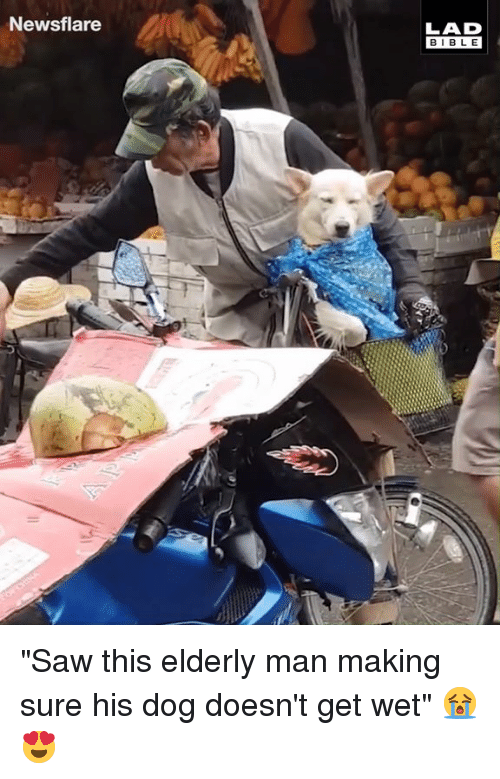 """Dank, Saw, and Bible: Newsflare  LAD  BIBLE """"Saw this elderly man making sure his dog doesn't get wet"""" 😭😍"""