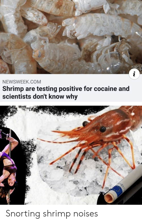 Cocaine: NEWSWEEK.COM  Shrimp are testing positive for cocaine and  scientists don't know why Snorting shrimp noises
