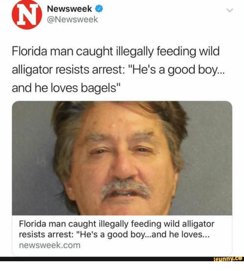 "Alligator: Newsweek  @Newsweek  Florida man caught illegally feeding wild  alligator resists arrest: ""He's a good boy...  and he loves bagels""  Florida man caught illegally feeding wild alligator  resists arrest: ""He's a good boy...and he loves...  newsweek.com  ifunny.co"
