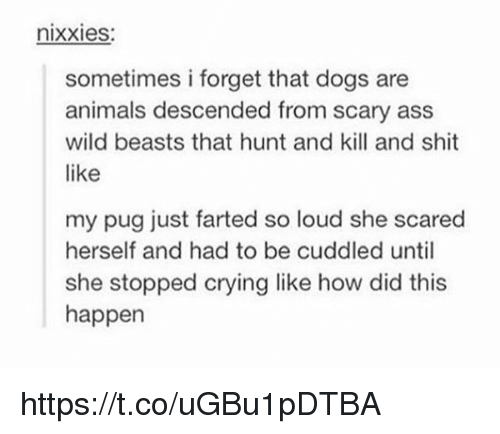 Pugged: nixxies:  sometimes i forget that dogs are  animals descended from scary ass  wild beasts that hunt and kill and shit  like  my pug just farted so loud she scared  herself and had to be cuddled until  she stopped crying like how did this  happen https://t.co/uGBu1pDTBA